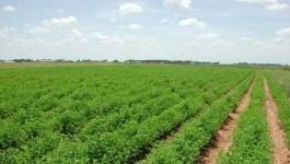 La police passe à tabac des agriculteurs à Bouira