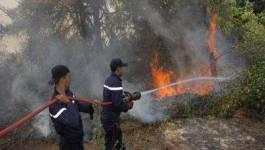 Constantine: un incendie ravage 152 hectares de la forêt d'Ain Bornaz à Ain Abid