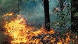 Incendies en Algérie : causes et état des lieux