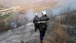 Pourquoi 21 000 hectares de forêts et de cultures sont partis en fumée ?