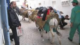 L'Algérie du balai
