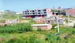 Alger : des terres agricoles pour la construction de logements
