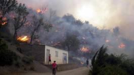 Les forêts de Tizi-Ouzou : un patrimoine en proie aux flammes