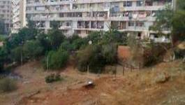 Affaire des Bois des Pins (Hydra) : la wilaya d'Alger déboutée