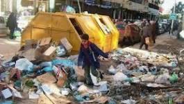 Oran : près de 800 victimes de morsures de rats en 2012