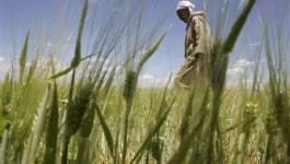 Algérie : plus de 150.000 ha détournés de leur vocation agricole