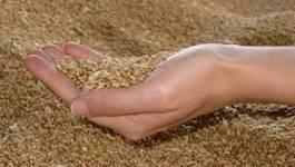 Algérie : la facture des importations de blé recule de 11% en janvier/février