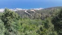 Les forêts ne représentent plus que 11% de la superficie de l'Algérie