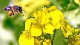 Abeilles : trois pesticides interdits, mais une persistance dans l'environnement