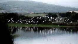 Skikda : protéger les oiseaux migrateurs de Guerbès-Sanhadja