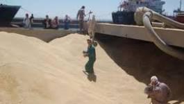 Forte hausse de la facture des importations de blé
