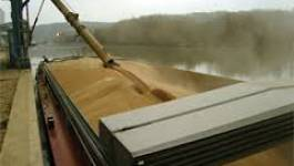 Hausse de la facture des importations de blé de plus de 14%