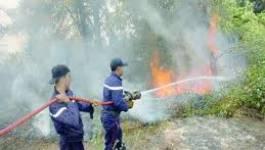 Feux de forêts : 544 hectares ravagés du 1er juin au 30 juillet