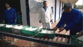 Algérie : les importations de lait en baisse en 2013