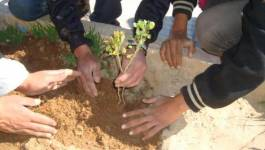 L'Armée nationale populaire a planté 2 millions d'arbres