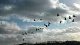 Aïn Témouchent : 18 espèces d'oiseaux rares recensées à Hassi El Ghella