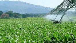 De l'agriculture algérienne entre autres …