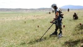 Plus de 5.000 mines datant de l'époque coloniale détruites en juin 2014