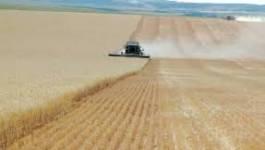 L'irrigation comme moteur pour soutenir la production agricole algérienne