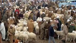 L'Aïd en Algérie : Mehdi et le mouton