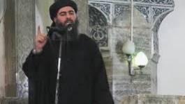 Les jihadistes égyptiens font allégeance à l'Etat islamique