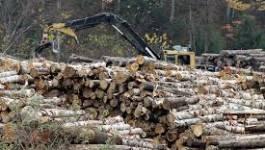 Les délits forestiers endommagent près de 520 hectares à El Tarf