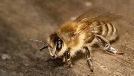 Et si on faisait comme les abeilles !
