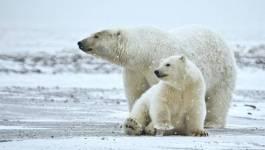 La sixième extinction animale de masse est en cours (étude)