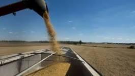 Céréales: les prix font une pause après la flambée de juin