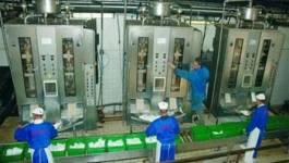 Batna : Giplait Aurès augmente la production en lait et dérivés