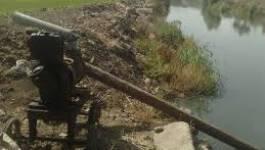 Batna : des terres agricoles irriguées avec des eaux usées