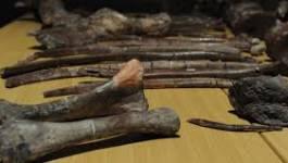 Découverte en Afrique du Sud d'une ancienne espèce du genre humain