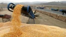 La facture d'importation des céréales baisse les huit premiers mois