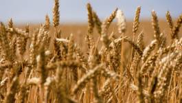 Le soja et les céréales en hausse, portés par des exportations et la météo