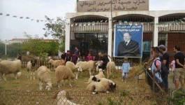 Une vente de moutons de l'Aïd sous le patronage du chef de l'Etat ?!