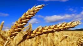 Hausse des importations des céréales