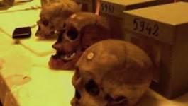 Des historiens français réclament la restitution des crânes d'Algériens à leur pays
