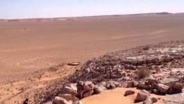 48% des terres agricoles algériennes non exploitées