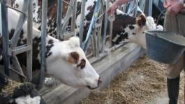 La facture d'importation du lait en baisse de 34% le 1er semestre 2016