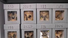Les crânes de résistants algériens et les augures d'Ould Abbès