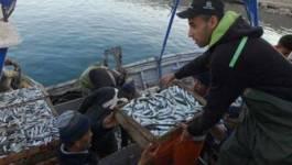 La sardine à 1000 DA et l'ail à 1400 DA dans les marchés de détails algériens ! (vidéo)