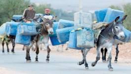 Contrebande: 660.000 véhicules au Maroc et en Tunisie roulent au pétrole algérien!