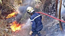 Plus de 50 hectares d'arbres forestiers ravagés par le feu à Jijel