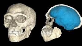 Science et idéologie, à propos de l'Homo sapiens nord-africain