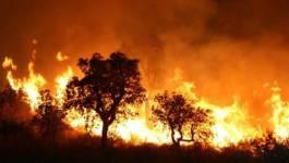 Incendies de forêts dans plusieurs wilayas: l'Armée intervient