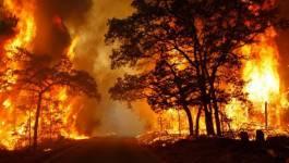 Incendies de forêts : qui a intérêt à entretenir l'écran de fumée ? (I)