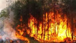 14 310 hectares ravagés par le feu depuis le 1er juin
