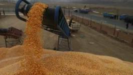 La facture des importations en céréales explose en 2011