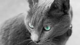 Medelci n'a rien dit et la nuit tous les chats sont gris
