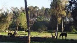 Parc national d'El-Kala : qui viole les lois ?